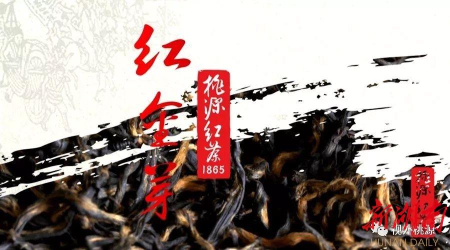 桃源红茶 红金芽